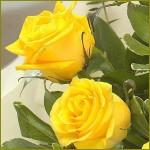 Ponturi pentru trandafiri