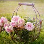 ingrijirea corecta si etapizata a trandafirilor